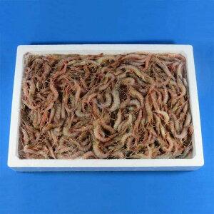小えび1kg [釣り餌(えさ) 小エビ 海老 エビ 冷凍板 冷凍エサ]