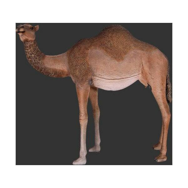 代引不可-アニマルビッグフィギュアシリーズ【ラクダ(駱駝)C】らくだ 雌 camel (等身大フィギュア)
