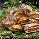 鮮魚 直送 オリーブあわび 1kg (11個〜12個 目安) 香川県産 (殻入り・養殖) 冷蔵 [送料無料 あわび アワビ 鮑 海鮮 貝…