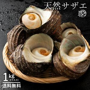 お中元 天然活サザエ さざえ (殻入り) 1kg (4〜5個) 天然サザエ 香川県産 冷蔵 [ 送料無料 海鮮 貝 バーベキュー BBQ 壺焼き 貝類 サザエ ギフト プレゼント お祝い 誕生日 ] グルメ