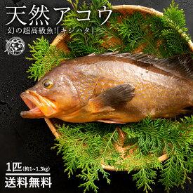 鮮魚 直送 アコウ キジハタ (生) 1尾 約 1kg〜1.3kg 幻の超高級魚!天然 香川県産 冷蔵 [送料無料 鮮魚 神経抜き 生キジハタ あかみず アカミズ ] グルメ お取り寄せグルメ