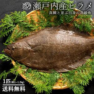 鮮魚 直送 ヒラメ ひらめ (生) 1尾 約1kg〜1.2kg 香川県産 冷蔵 [送料無料 神経抜き 鮮魚 平目 魚 刺身 ] グルメ