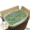 ◆令和元年度産新刈り◆牧草市場スーパープレミアムチモシー1番刈り牧草 5kg袋入(うさぎ・モルモットなどの牧草 業…