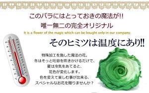 送料無料温度で色が変わるッ★魔法のプリザーブドフラワーバラ(KUMA・KUMA)ドーム【RCP】花フラワープレゼントめざましテレビで紹介♪