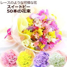 お届け期間限定!春の香りを贈っちゃおう♪選べるスイートピー(スイトピー)50本の花束【HLS_DU】