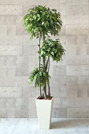 【送料無料】トリプルベンジャミン 150cm(鉢色:ホワイト)【人工観葉植物】 【フェイクグリーン】 【おしゃれ】 【観葉植物】 【造花】 【光触媒】 【大型】 トリプルベンジャミン 150cm(鉢色:ホワイト)