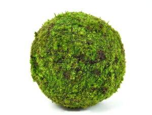 モスボール 22cm 苔盆栽 苔玉 和盆栽 山苔 ギフト 贈り物 おしゃれ モダン インテリア グリーン