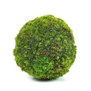 モスボール 14cm 苔盆栽 苔玉 和盆栽 山苔 ギフト 贈り物 おしゃれ モダン インテリア グリーン