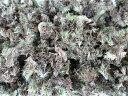 苔 日光産 天然 山苔 ヤマゴケ マンジュウゴケ ( 粉砕タイプ ) 約1リットル袋入り 雑木 各種 盆栽 まきゴケ 苔の種 土…