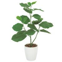 光の楽園ウンベラータ80観葉植物光触媒人工植物W52×D35×H80cm