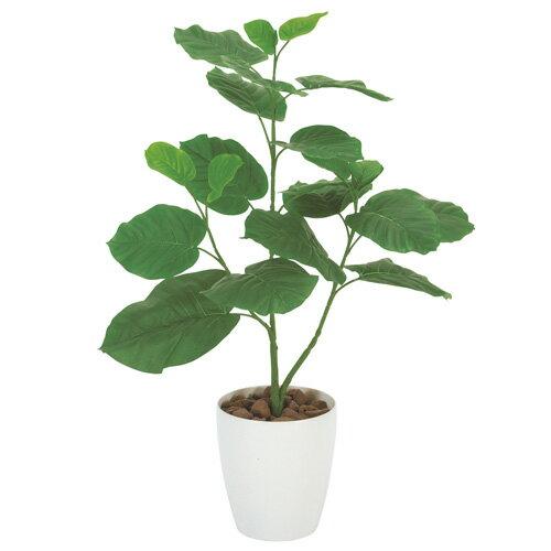 光の楽園 ウンベラータ 80観葉植物 光触媒人工植物W52×D35×H80cm