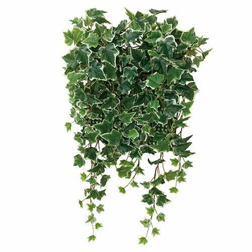 光の楽園 壁面緑化 斑入りアイビー観葉植物 壁掛け ウォールグリーンW50×D20×H65cm