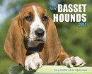 Just Basset Hounds