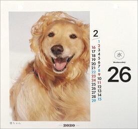 卓上 日めくりワンコ!(2020年1月始まりカレンダー)