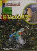 鳥超・びっくりパワ-