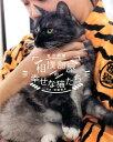 相撲部屋の幸せな猫たち [ 荒汐部屋 ]