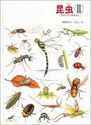 昆虫(2)