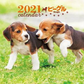 2021年 大判カレンダー ビーグル (誠文堂新光社カレンダー) [ 平林 美紀 ]