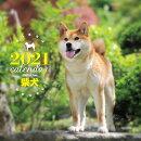 2021年 大判カレンダー 柴犬