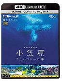 世界自然遺産 小笠原 〜ボニンブルーの海〜【4K ULTRA HD】