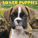 Just Boxer Puppies 2019 Wall Calendar (Dog Breed Calendar)