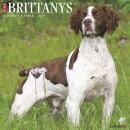 Just Brittanys 2019 Wall Calendar (Dog Breed Calendar)