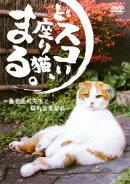 どスコい座り猫、まる。〜養老孟司先生と猫の営業部長〜