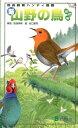 新・山野の鳥改訂版 [ 安西英明 ]