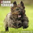 Just Cairn Terriers 2019 Wall Calendar (Dog Breed Calendar)