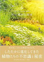 世界でいちばん素敵な花と草木の教室 [ 稲垣栄洋 ]