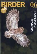 BIRDER (バーダー) 2011年 06月号 [雑誌]