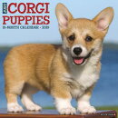 Just Corgi Puppies 2019 Wall Calendar (Dog Breed Calendar)
