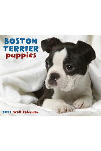 Boston_Terrier_Puppies_Wall_Ca