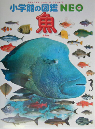 小学館の図鑑NEO 魚 (小学館の図鑑 NEO) [ 井田 齊 ]