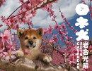 日本犬カレンダー(2019)