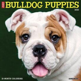 Just Bulldog Puppies 2021 Wall Calendar (Dog Breed Calendar) JUST BULLDOG PUPPIES 2021 WALL [ Willow Creek Press ]