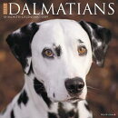Just Dalmatians 2019 Wall Calendar (Dog Breed Calendar)