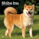 Shiba Inu 2019 Square
