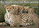 Symphony of Savanna [ 井上冬彦 ]