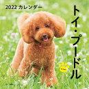 2022年 カレンダー トイ・プードル【100名様に1、000円分の図書カードをプレゼント!】