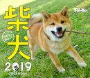 カレンダー柴犬おはなし週めくり(2019)