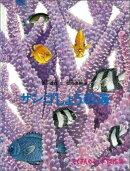 サンゴしょうの海