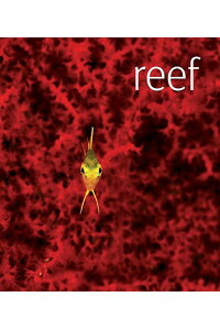 Reef_With_DVD