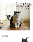 まこという名の不思議顔の猫 (3)