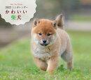 2022年 カレンダー かわいい柴犬【100名様に1、000円分の図書カードをプレゼント!】