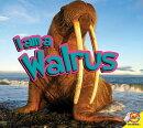 I Am a Walrus