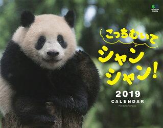 こっちむいてシャンシャン!カレンダー 壁掛け(2019)