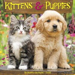 Kittens & Puppies 2019 Wall Calendar