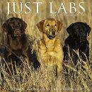 Just Labs 2019 Wall Calendar (Dog Breed Calendar)