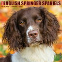 Just English Springer Spaniels 2021 Wall Calendar (Dog Breed Calendar) JUST ENGLISH SPRINGER SPANIELS [ Willow…